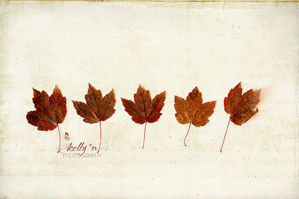 Little Maples - Maple Leaf Photography