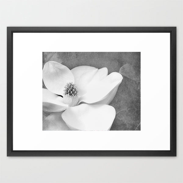 Magnolia Dream- Flower Photography - Kelly*N Photography - 2