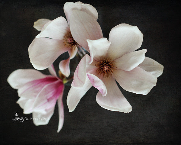 Magnolia Portrait- Floral Still Life Photo - Kelly*N Photography - 1