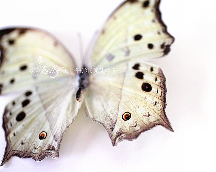 Mother of Pearl Butterfly - Butterfly Photograph - Kelly*N Photography - 3