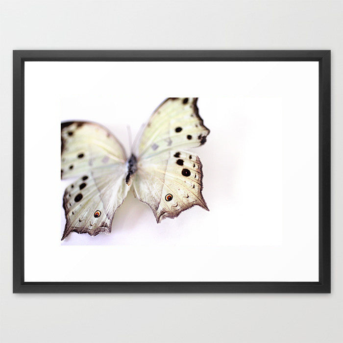 Mother of Pearl Butterfly - Butterfly Photograph - Kelly*N Photography - 2