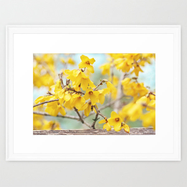 Spring Forsythia- Yellow Flower Photography - Kelly*N Photography - 2