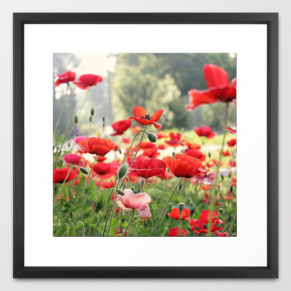 Spring Poppies- Red Flower Photography - Kelly*N Photography - 4