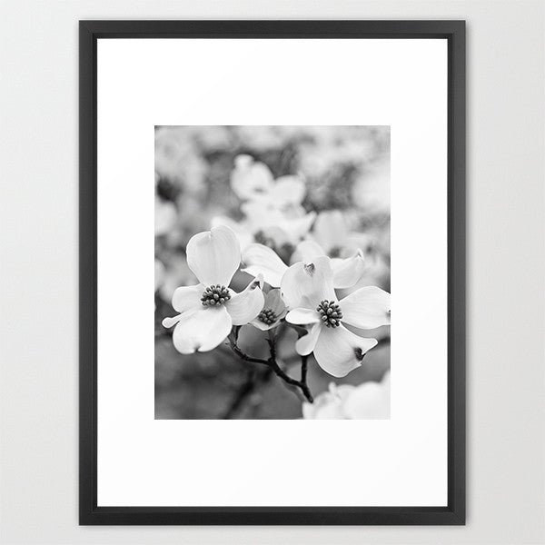 BW Dogwood Dance- Dogwood Flowers Photograph - Kelly*N Photography - 2