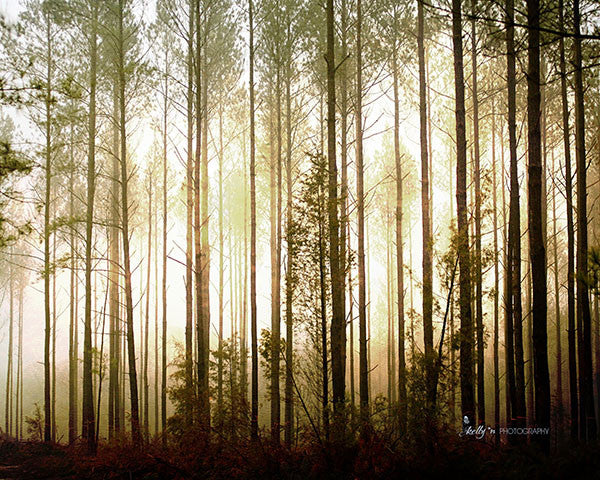 Glowing Forest- Tree Photography - Kelly*N Photography - 1
