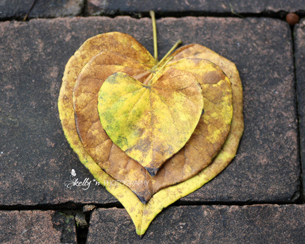 I Heart Autumn - Nature Photography