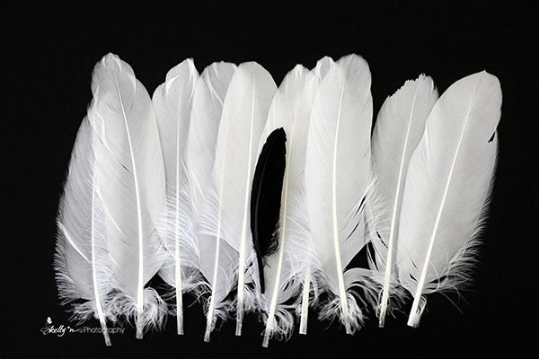 Just One- Feather Photography - Kelly*N Photography - 1