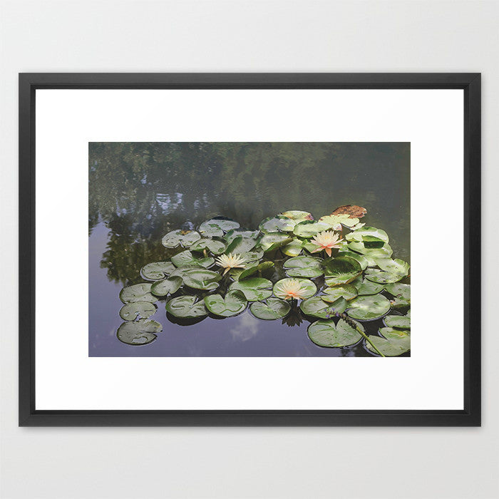 Lily Pond- Nature Photography - Kelly*N Photography - 2
