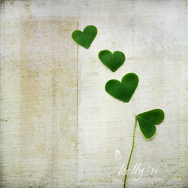 Love and Luck- Shamrock Photograph - Kelly*N Photography - 1