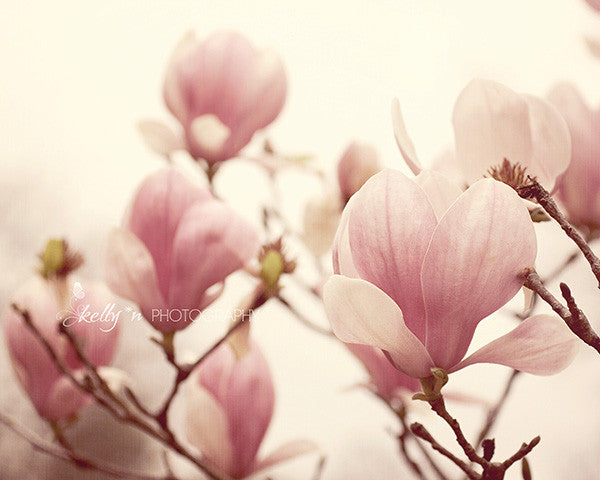 Magnolia Memory - Flower Photography