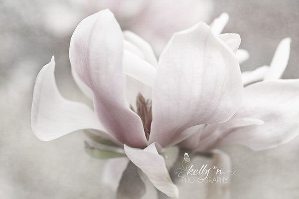 Moody- Magnolia Flower Phtograph - Kelly*N Photography - 1