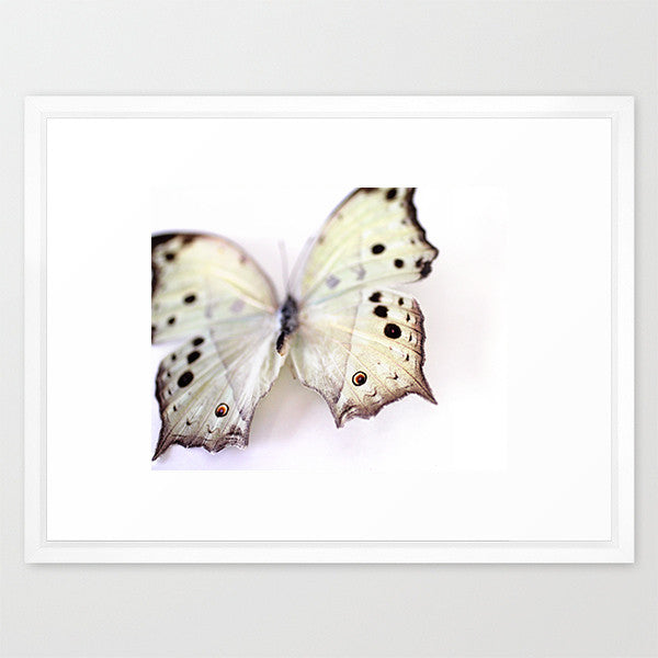 Mother of Pearl Butterfly - Butterfly Photograph - Kelly*N Photography - 4