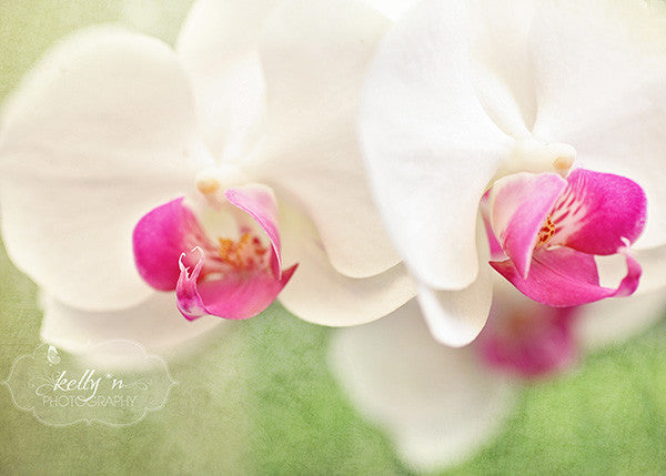 Orchids 6 - Flower Photography