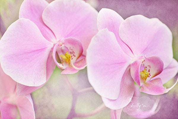 Pink Orchids - Flower Photography