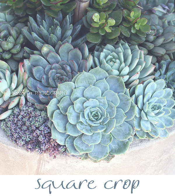 Succulent Container- Succulent Photograph - Kelly*N Photography - 4