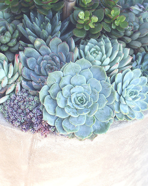 Succulent Container- Succulent Photograph - Kelly*N Photography - 1