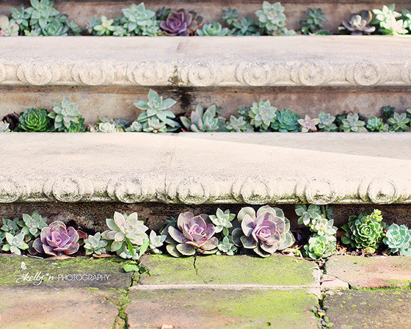 Succulent Steps- Succulents Photograph - Kelly*N Photography - 1