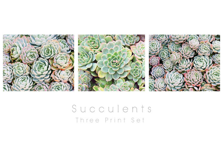 Succulents Photography - Three Print Set
