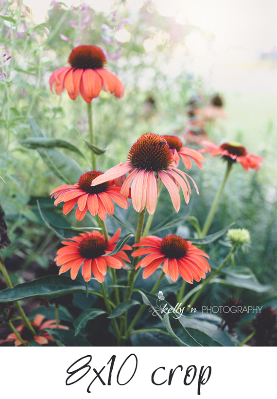 Summer Morning Flowers - Flower Photography