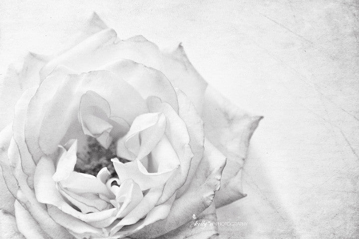 Swoon Rose - Black and White- Flower Photography - Kelly*N Photography - 1