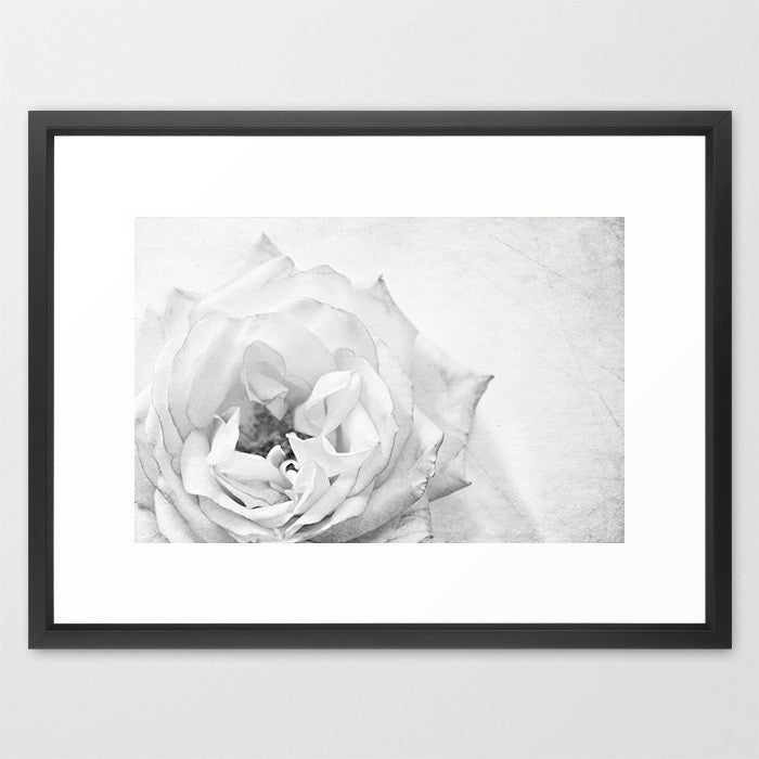 Swoon Rose - Black and White- Flower Photography - Kelly*N Photography - 2