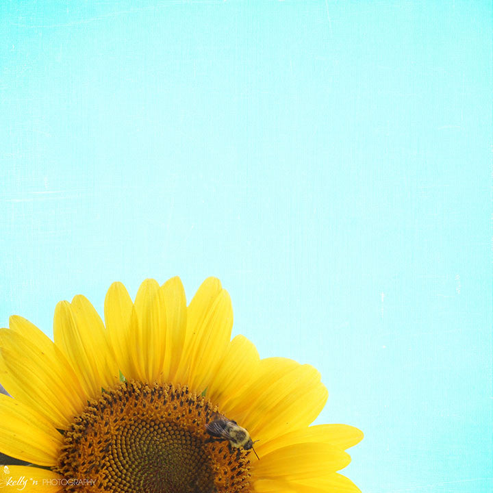 Walking on the Sun- Sunflower Photograph - Kelly*N Photography - 1
