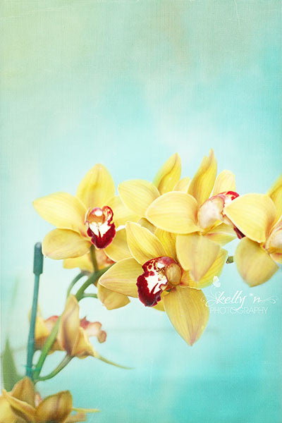Yellow Orchids- Orchid Photography - Kelly*N Photography - 1