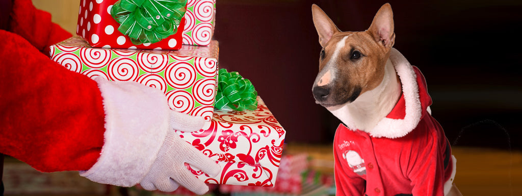 What is the Perfect Holiday Gift for a Dog?
