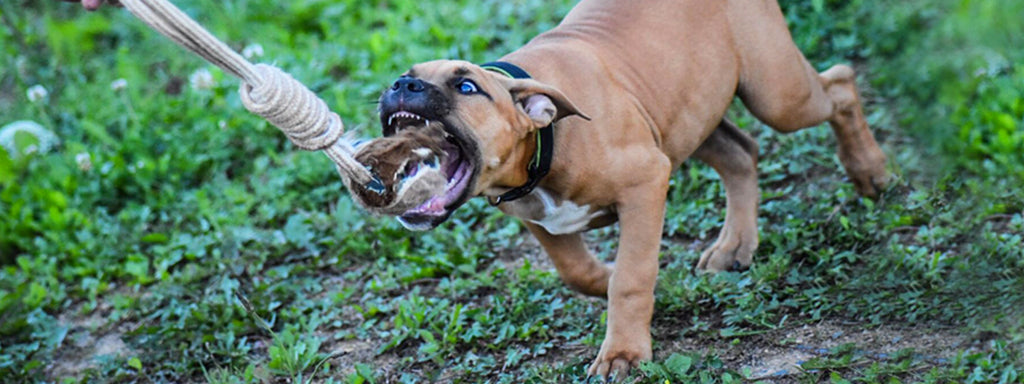 Top 5 Aggressive Puppy Warning Signs