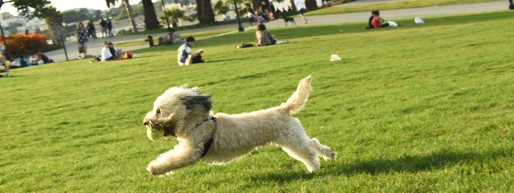 Top 5 Dog-Friendliest Cities in the US and Why