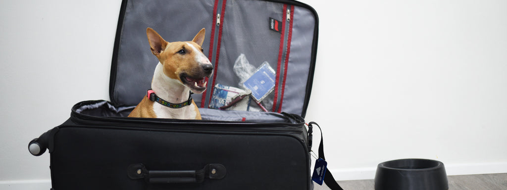 10 Hacks for Traveling with Dogs