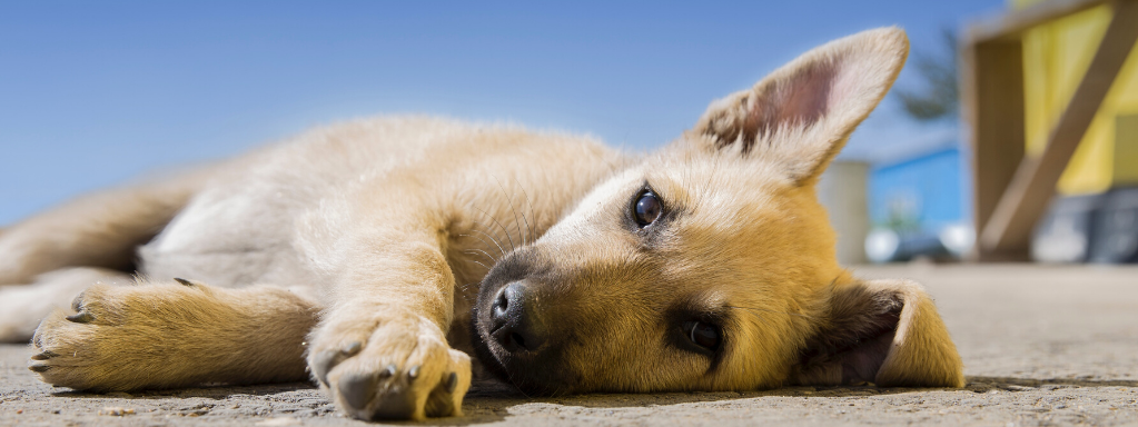 5 Most Common Injuries in Dogs