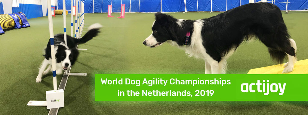 Fargo Is Back From the World Dog Agility Championships!