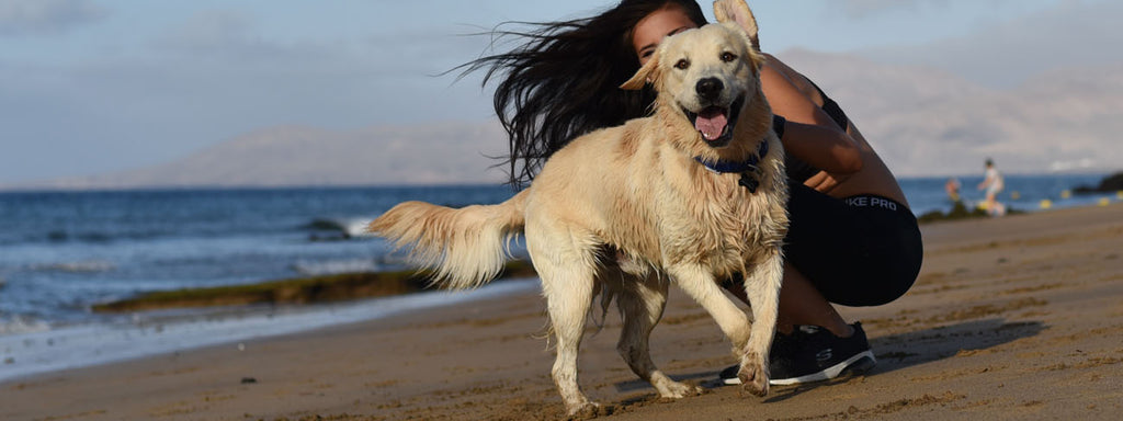 10 Best Dog Breeds that are Good Off-Leash