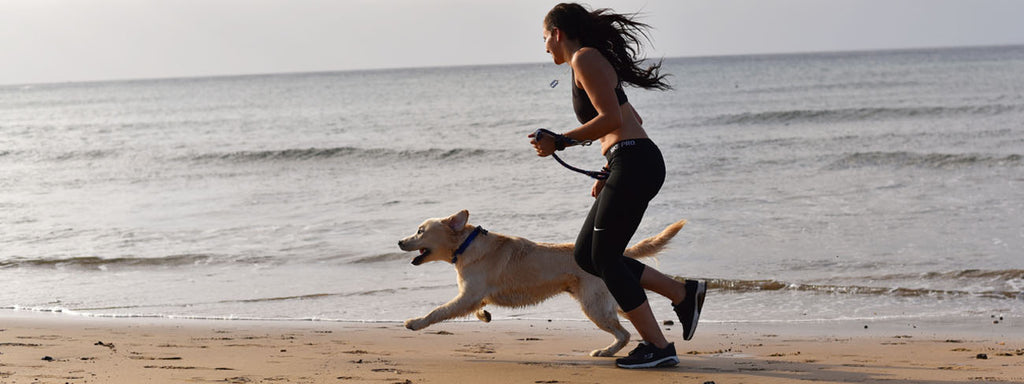 Combining Your Workout and Your Dog's Playtime