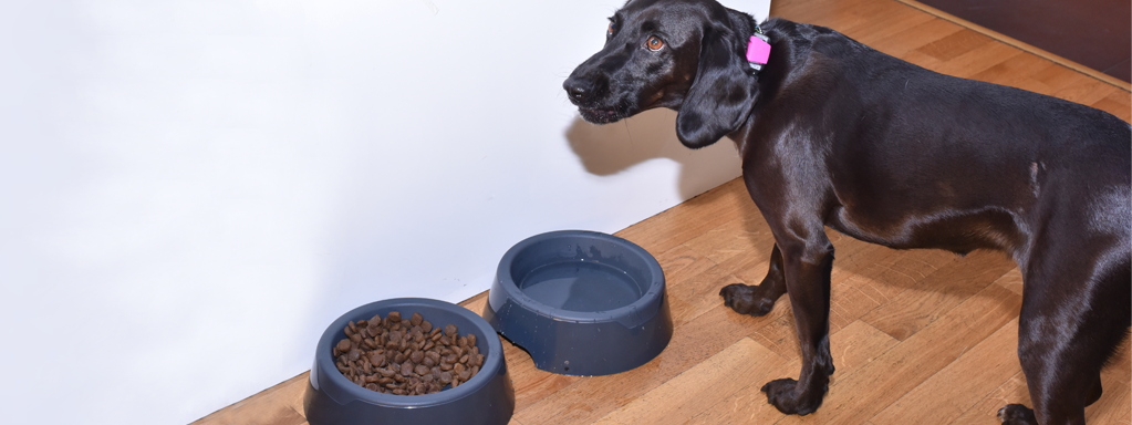 Dog Anorexia:  What to do When Your Dog isn't Eating