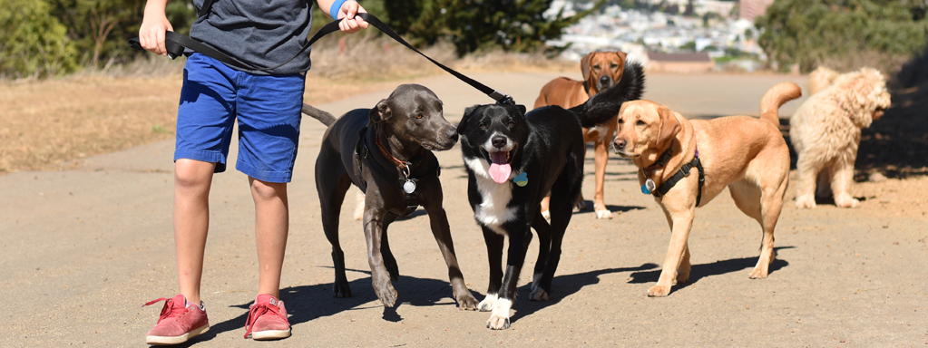 Hiring a Dog Walker:  Are You Getting What You Paid For?