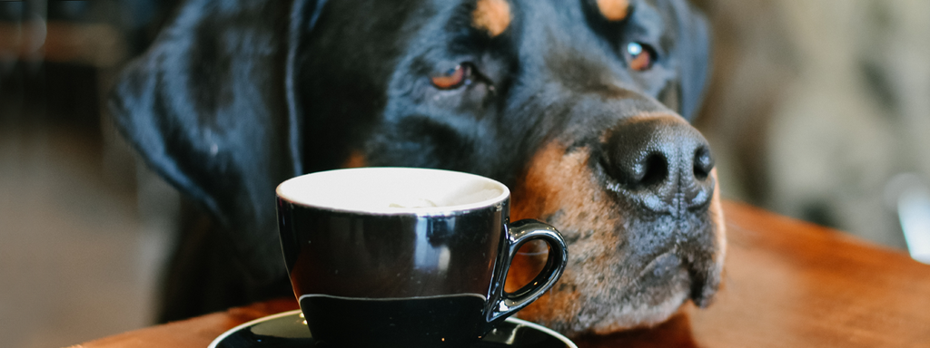 Coffee: How Good or Bad Is It for Your Dog?