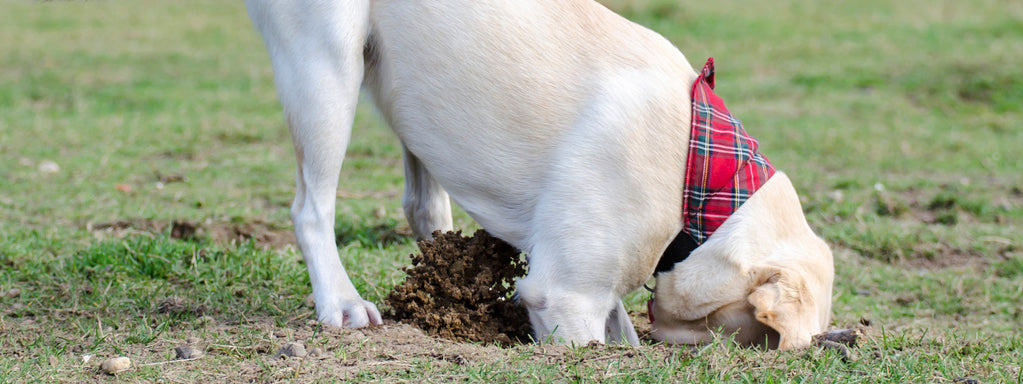 Dog Behavior – Bad Habits: Digging Holes