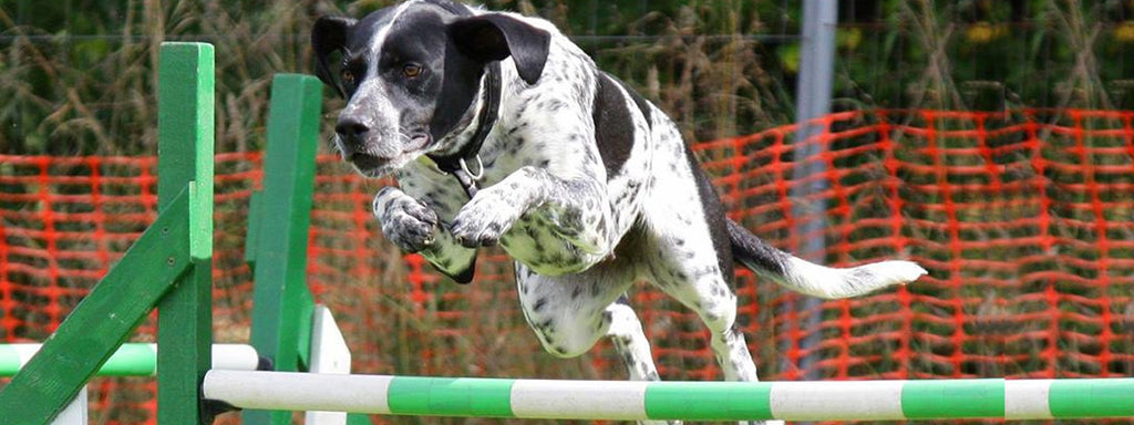 How Can Agility Training Benefit Both you and your Dog