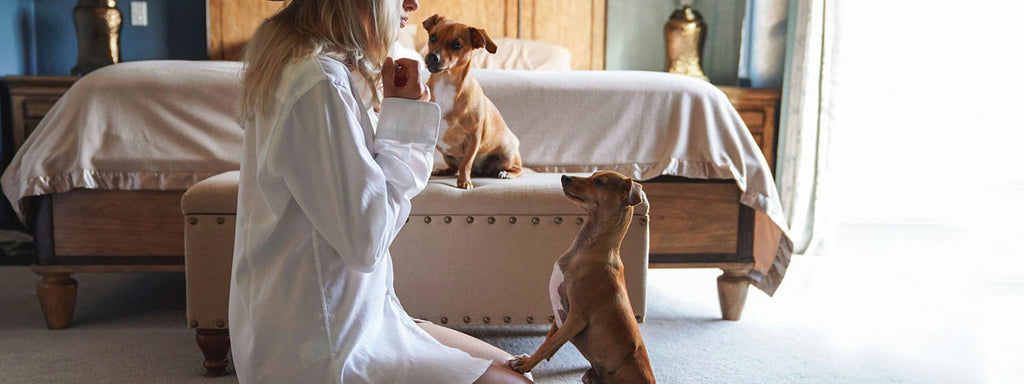 Things to Know When Training Your Dog at Home