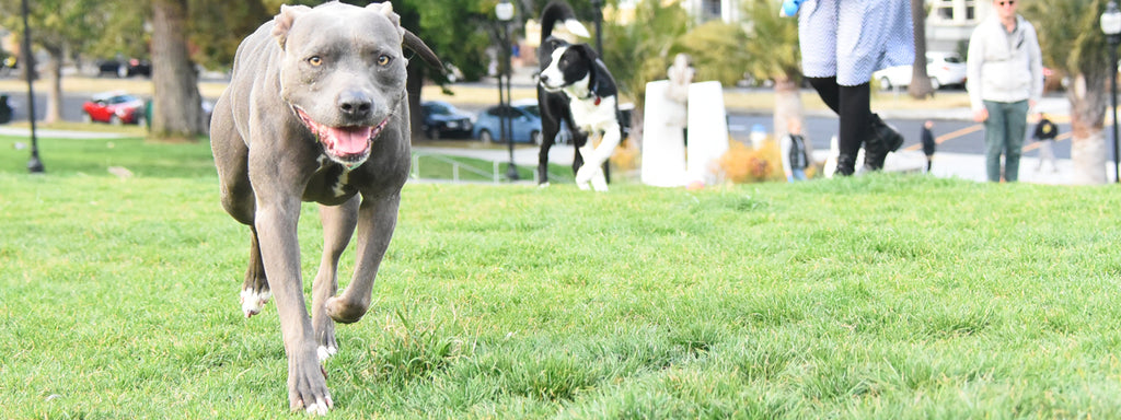 Top dog parks in San Francisco and Bay Area: Part 1