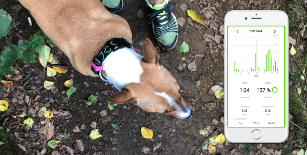 Dog wearing the activity tracker