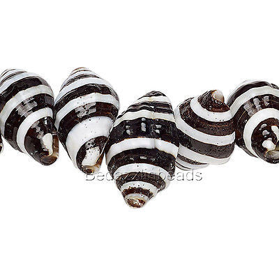 Natural Black & White Striped Genuine Whelk Whole Sea Shell Seashell Beads~Sold Individually