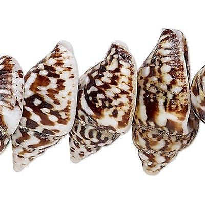 Little Natural Genuine Brown & Beige Nassa Tiger Whole Shell Seashell Beads~Sold Individually