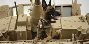 Military Dogs | 7 Facts About the Military's Greatest Asset