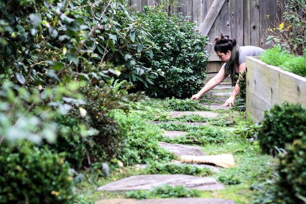 Winter pruning – with the essentials. – Garden Apothecary