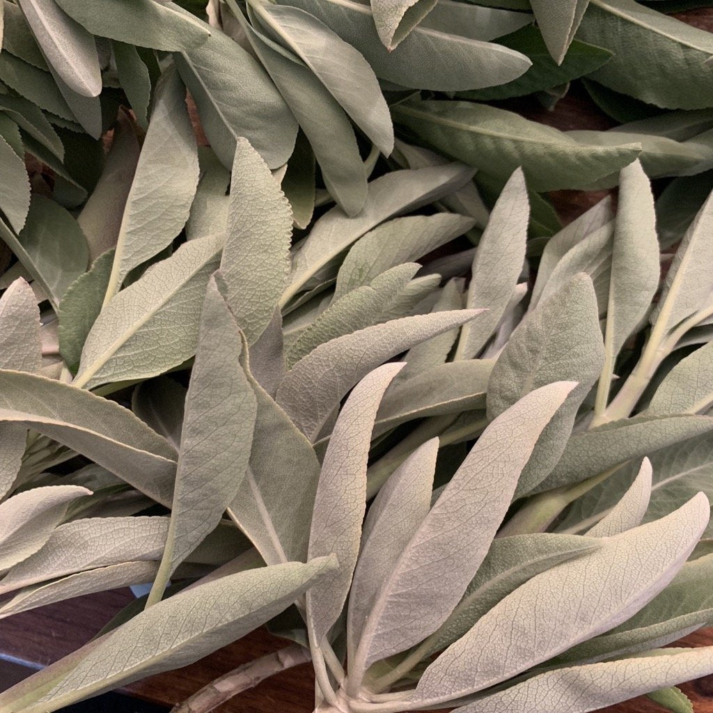 Organic White Sage Leaves