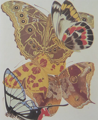Eugene Seguy 3 Colourful butterflies