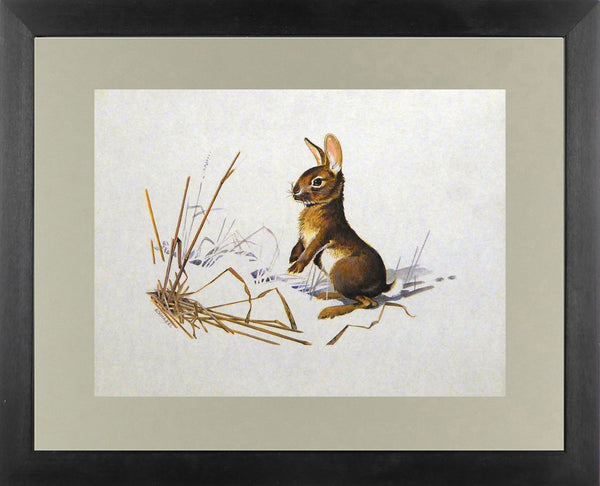 Hare in a field Willi Schnabel